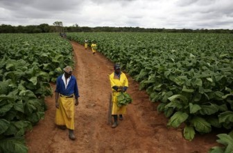Zimbabwe's Agribank obtains US $30m in support of the agriculture sector