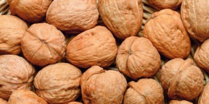 Kenya's macadamia farmers' earning increases to US $69m
