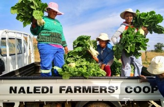 Tsebo Solutions Group supports community upliftment at Rustlers Valley Farm as part of UN International Day of Cooperatives