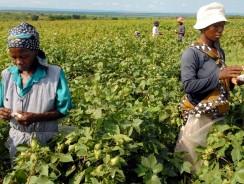 IDA, Sierra Leone sign US $10m Agro-Business Financing Agreement